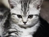 Как ведут себя коты после кастрации