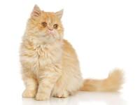 Почему кошка не ест не пьет и не ходит в туалет