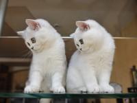 Как отучить котенка грызть провода?