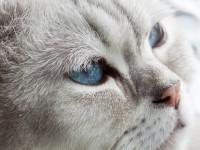 Милые кошки с косоглазием