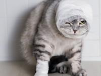 Почему кошка расчесывает себя до болячек?