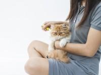 Как избавиться от аллергии на кошек в домашних условиях