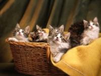Как и чем кормить котенка в 2 месяца