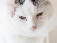 Что делать, если у кота отказывают почки?