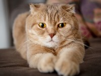 Через сколько после родов можно стерилизовать кошку