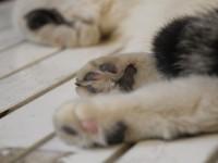 Что делать, если кот сломал лапу?