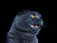 Что делать, если у кота поликистоз почек?