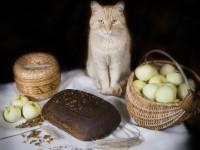 Можно ли давать кошкам хлеб?
