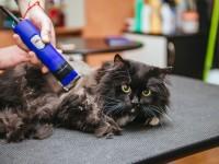 Виды машинок для стрижки кошек