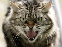 Что делать, если кошка сошла с ума?