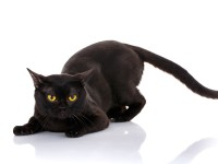 Болячки с запахом у кошки