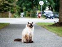 Почему кошка ездит попой по ковру