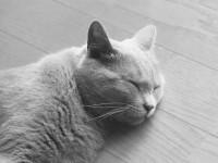 Почему кошка во сне мяукает?