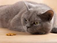 Что делать, если котенок ничего не ест?