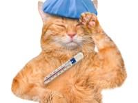 После стерилизации температура у кошки