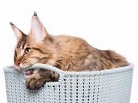 Как отучить кота метить в квартире