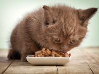 Как приучить котенка кушать самому