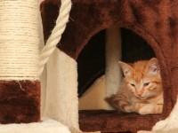 Как приучить кошку к домику?