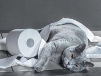 Что дать котенку от запора?