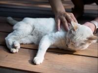 Как обездвижить кота?