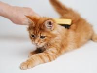 Что делать при запоре у 2 месячного котенка