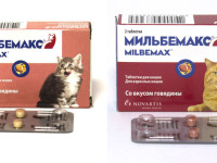 Как давать Мильбемакс кошке?