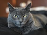 Что делать, если кот метит в доме