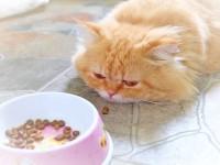 Чем кормить кота при почечной недостаточности?