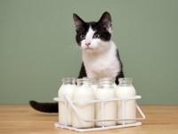 Что делать если кот не ест и не пьет