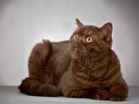 Какой должна быть температура тела у кошек