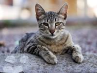 У кота из глаз черные выделения