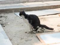 Сухой кал у кота