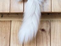 Что делать, если у кошки висит хвост