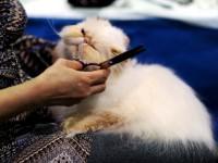 Какие бывают стрижки кошек?