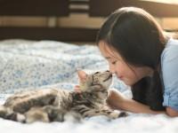 Чем убрать запах кошачьей мочи?