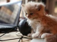 Почему кот грызет провода?