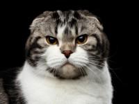 Почему кот хрюкает?