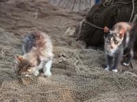 Что делать, если кошка съела нитку?