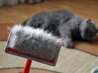Витамины для кота от выпадения шерсти