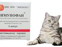 Инструкция по применению препарата Имунофан для кошек