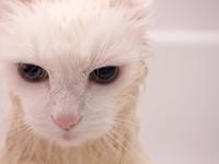 Почему кот чихает и слезятся глаза