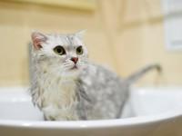 В каком возрасте можно купать котенка