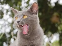 Почему у кошек шершавый язык?