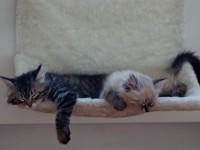 Что делать чтобы котенок стал ласковым