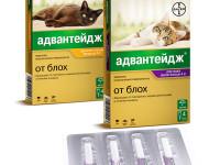 Инструкция по применению препарата Адвантейдж для котов
