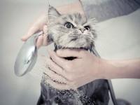 Как купать котенка?