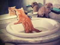 Уход за 1 месячным котенком