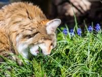 Какая трава особенно любима кошками