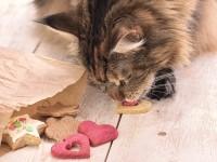 Смешанное кормление кошек