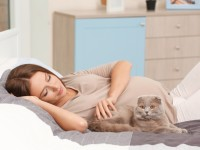 Почему кошка ложится на живот беременной?
